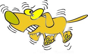 wag-the-dog[1]